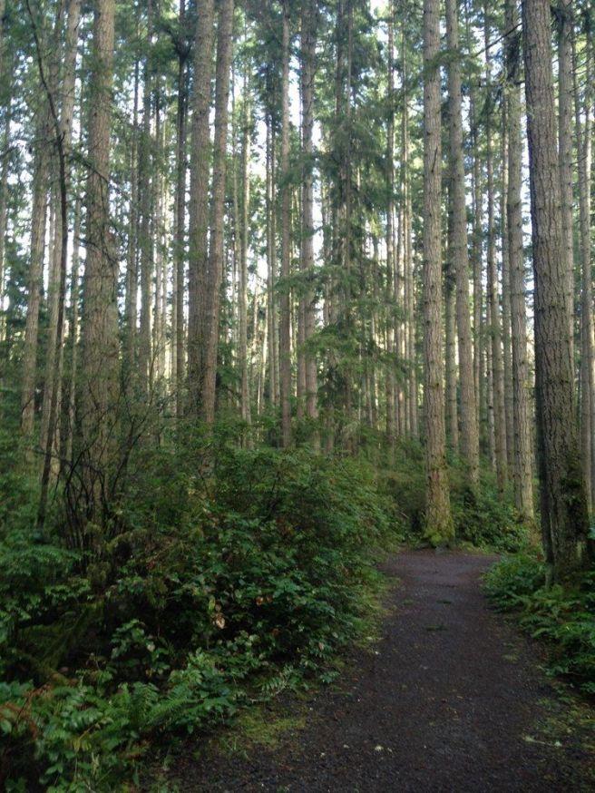 grandforest