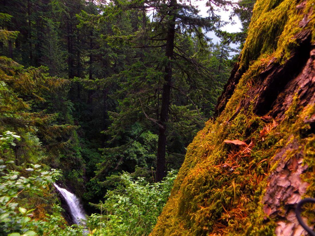 hamilton-mountain-and-rodney-falls-trail