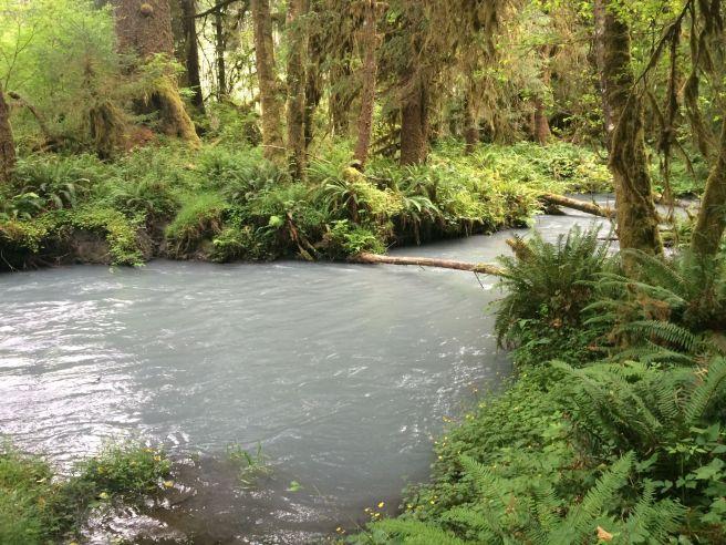hoh-river-trail