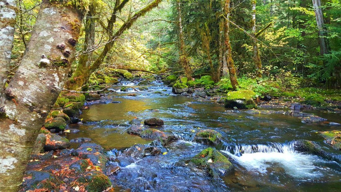 lower-falls-creek-trail