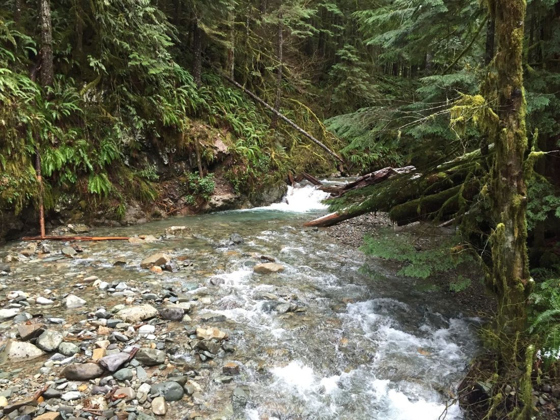 lower-siouxon-creek-trail