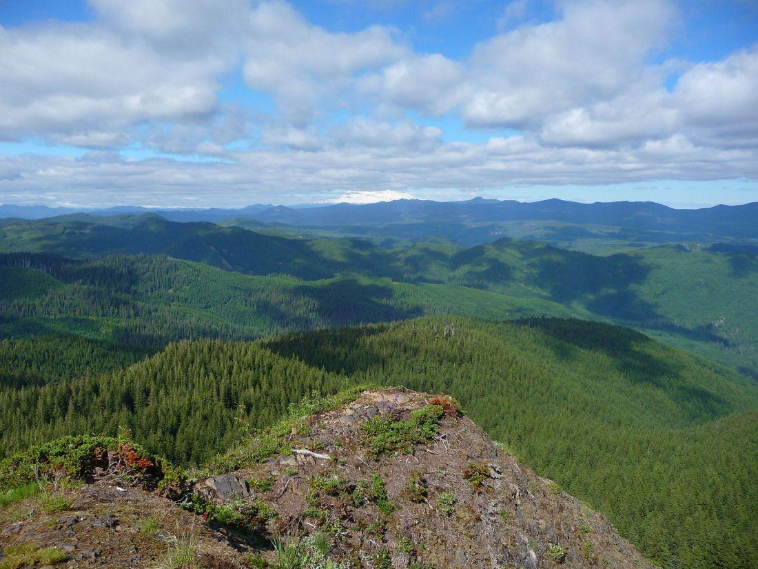 observation-peak-trail
