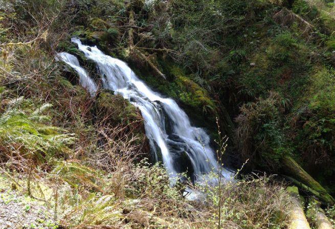 quinault-loop-trail