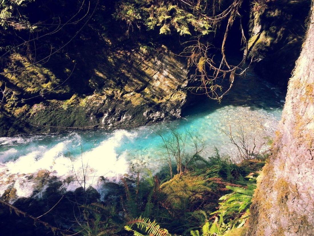 quinault-river-pony-bridge-trail